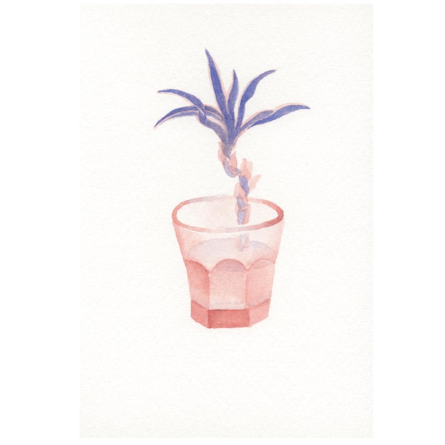 観用植物-1