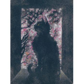 窓際猫(桜)