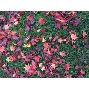 「秋、音について考える」あらいいづみ エッセイNo.5