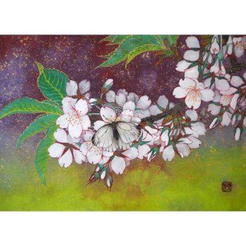 桜と筋黒白蝶