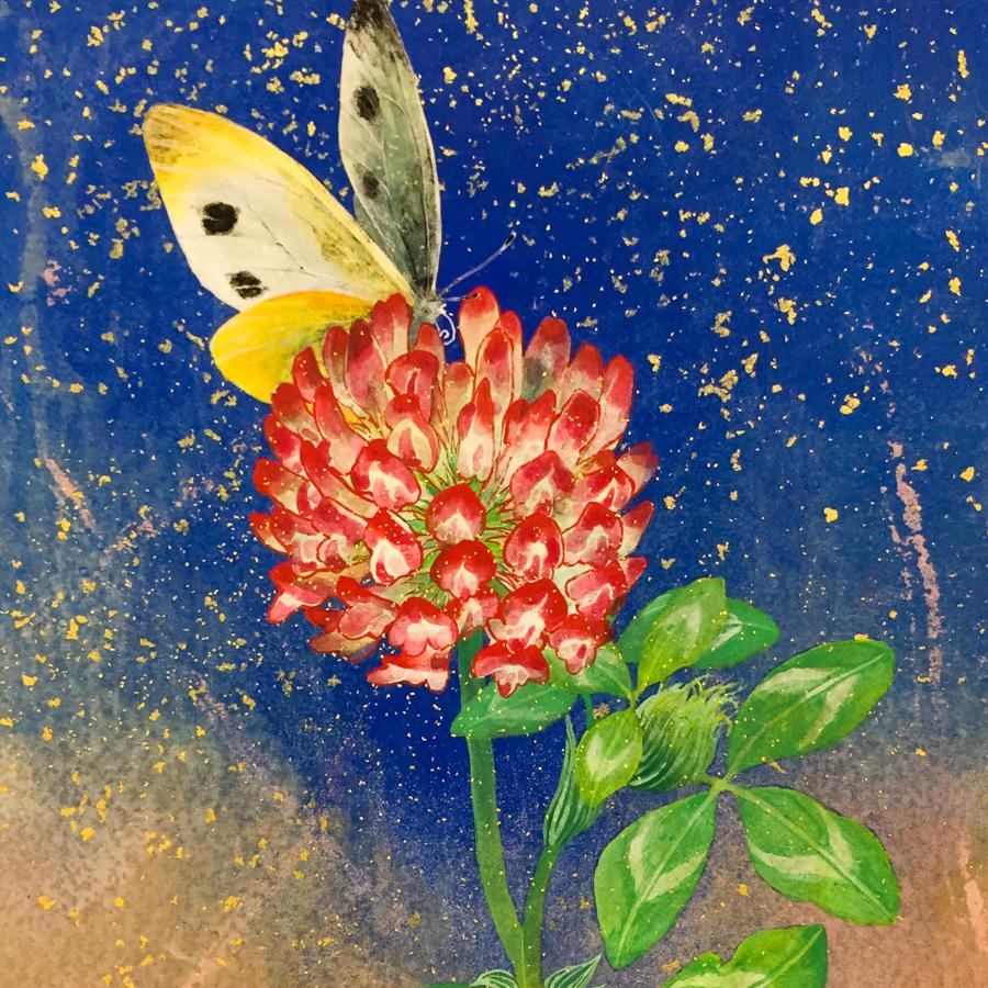 赤詰草と紋白蝶-5