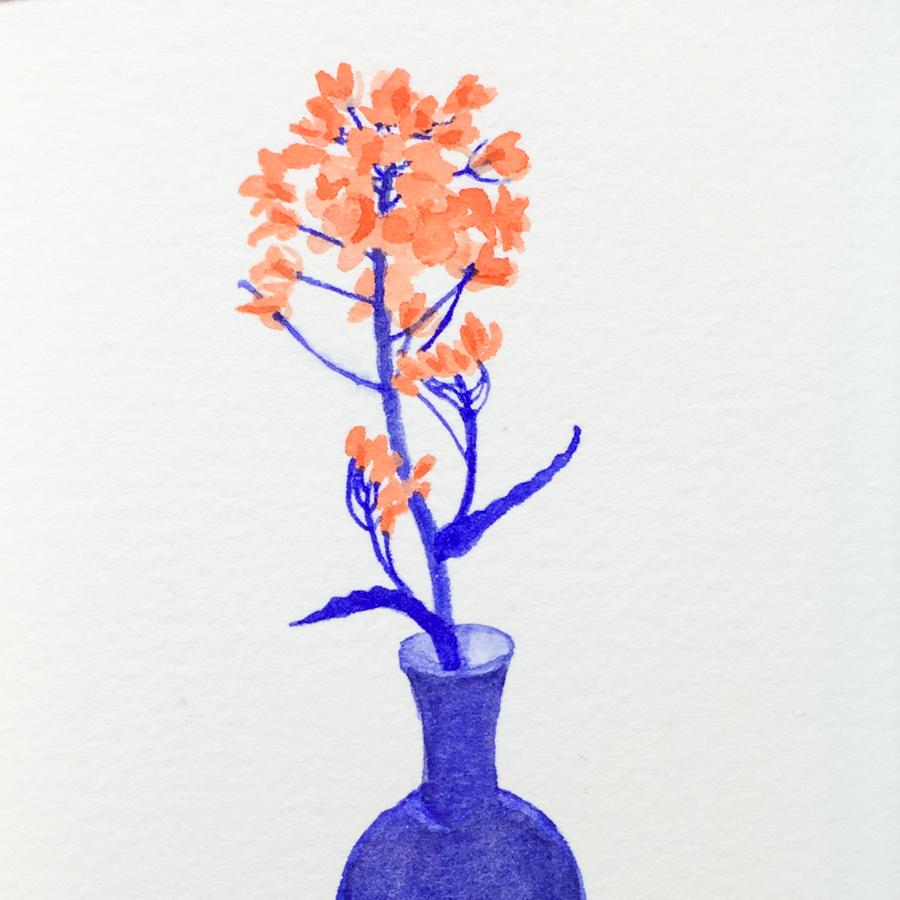 菜の花-4